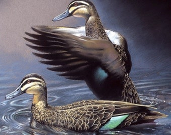 Pacific Black Ducks pastel - wildlife art - nature, limited edition print
