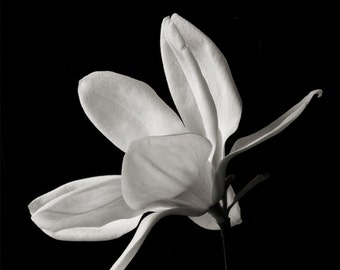 black and white_no_6