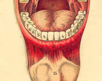 Vintage Dental mouth tongue print teeth  anatomy print Dentist dental gift