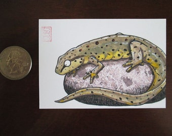 ACEO Eastern Newt - Archival Print - Salamander Art