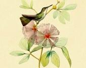 Hummingbird Print, Hummingbird Poster, White-Billed Emerald Hummingbird on Pink Blossom, Botanical Print, Garden Art, Bird, Wall Hanging