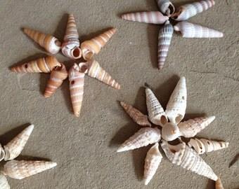 Auger Shells- Sea Shells - Shells for Crafting
