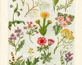 1925 Antique flower art print, FLOWERS Of The SEASIDE, floral bookplate prints, botanical flower art illustration 5643 5644