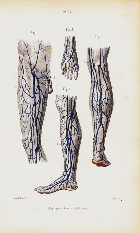 1843 Antique Anatomy Print Leg Arm Foot Veins Foot