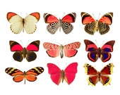 Fiery Moth Collection Wall Decal Set