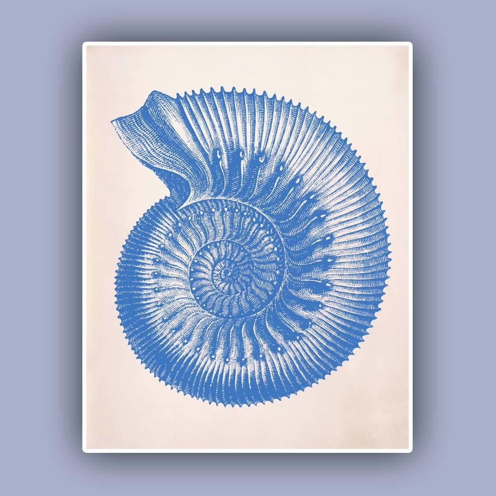 Ammonite Seashell Print sea fossil ammonite print by AlgaNet