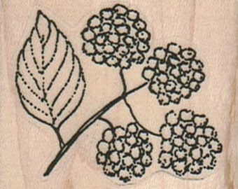 Rubber stamp berry berries raspberry  fruit  stamp   number 12972  summer garden wood mounted, unmounted or cling stamp