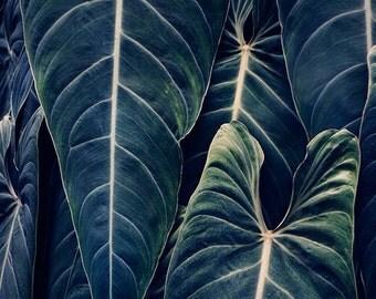 Blue Plant Leaves, Nature Photography, Botanical Print, Garden Art, Spring, Home Decor, 8x8 Print - Something Blue