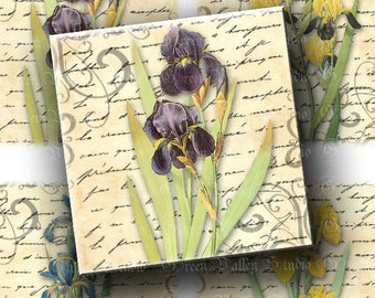 INSTANT DOWNLOAD Digital Images Sheet Vintage Lovely Iris Handwriting Flowers Blurry Edges 3.7 x 3.7 Inch Squares for Coasters Crafts (CT6)