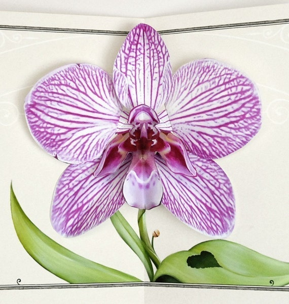 Orchid Pop Up Card - Purple Zebra Flower for birthday, anniversary, congratulations and thinking of you special gift occasions