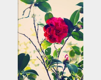 Camellia Photograph, Bright Red Flower Photo, Camellia Wall Art, Dramatic Flower Art, Spring Flower Photo, Red Green White, Flower Garden