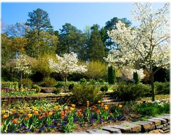 Springtime at Duke Gardens