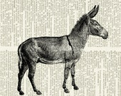 donkey dictionary page print
