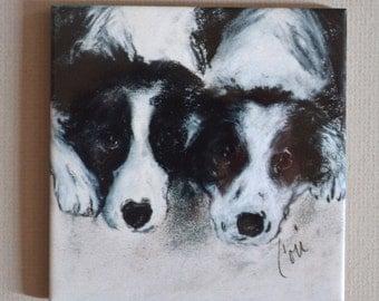 Two Border Collies Dog Art Tile Coaster  By Cori Solomon
