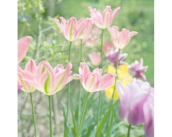 Tulip Art,  Floral Art Print, Flower Wall Decor, Tulip Print, Flower Photography, Nursery Art, Pink Tulip Photo