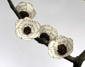 Secanja - Acorn Miniature and Pine Cones Rustic Bonsai on American Walnut base - Original Art Paper Sculpture by Tanja Sova