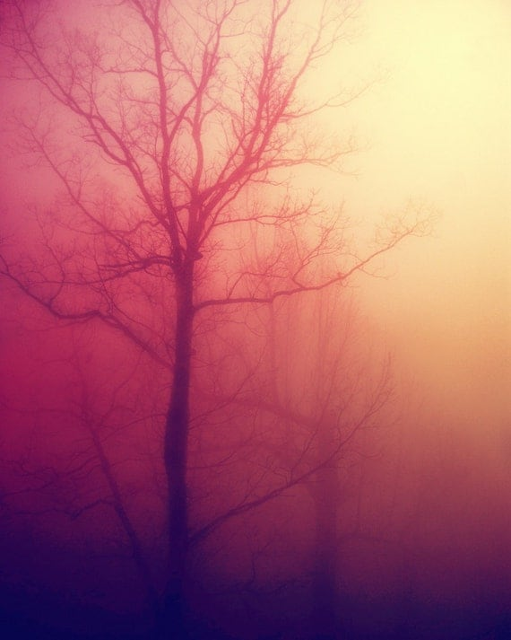 8x10 winter trees photograph silhouette dreamy haunted nature photography peach pink pastel fine art photo print