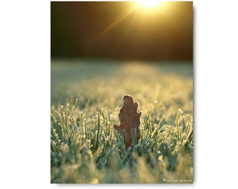 Frosty Morning In The Forest Nature Print Frozen Grass Leaf Winter Sun Rays Natural History Green Grass Beautiful Photograph Seasons