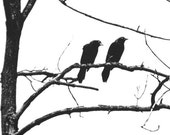 Birds In Tree Nature Photo Black And White Wildlife Photography Monochromatic Bord Photography Silhouette Raven Crows Brown Blue 5 x 7 Print