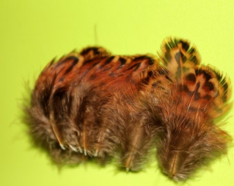 25 Hen Pheasant Craft Feathers Fly Tying Feathers