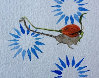 Original Watercolor  -Rosehip on Blue Stars 5 x 7