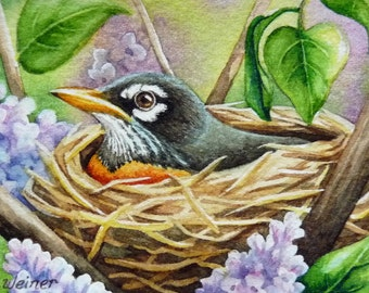 Robin & Nest Miniature Art - Limited Edition ACEO Giclee Print reproduced from the Original Watercolor