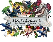 Bird Collection 1 - PNG image set - Downloadable  Images for ACEO, Tags, Collage Art, and More
