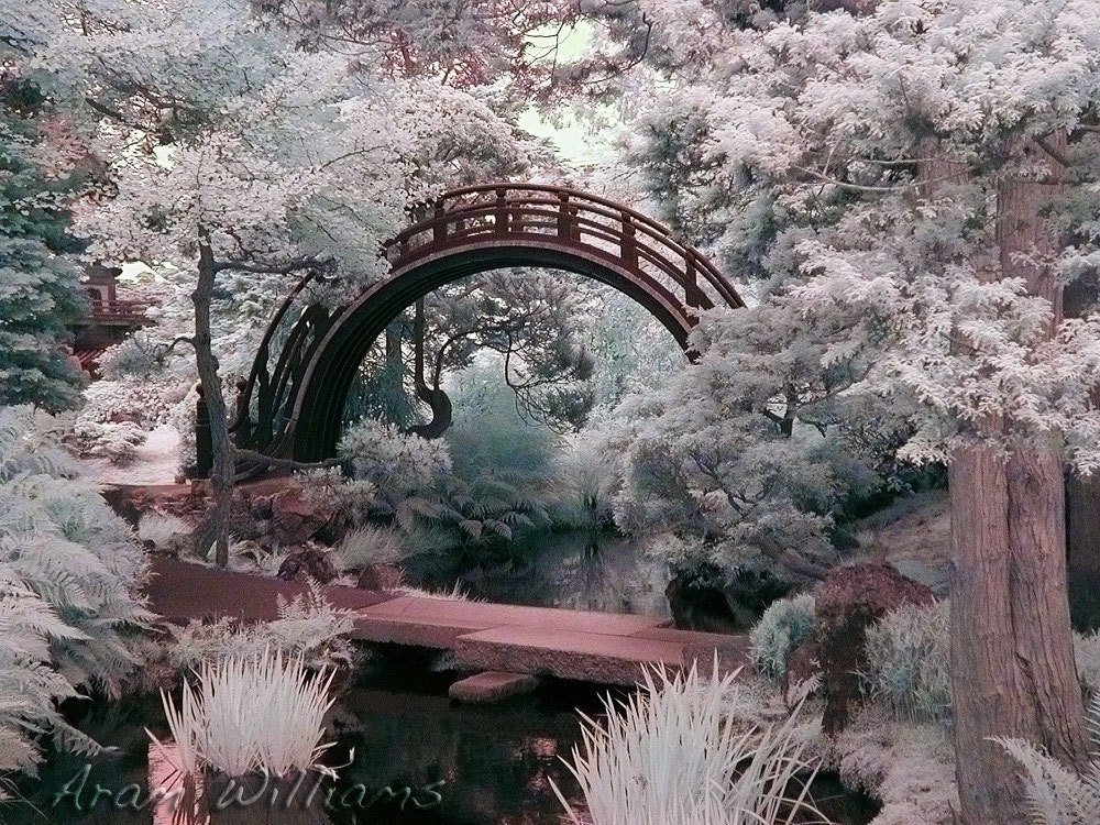 Japanese Garden Cherry Blossom Bridge japanese garden bridge infrared photograph 8.5 x 11