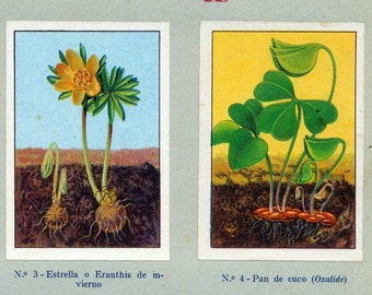 1932 Vintage Spanish Sheet of Illustrations on Leaves. Sheet 2