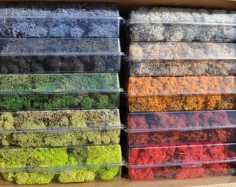 10 NEW Colors Reindeer moss-Get all 10 colors in 1 bag-10 oz bag total-Preserved lichens-Reindeer moss in colors