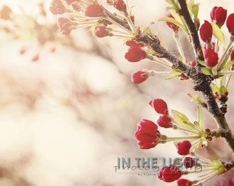 Spring Blossoms 1 - fine art photography