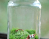 wee cows grazing on moss