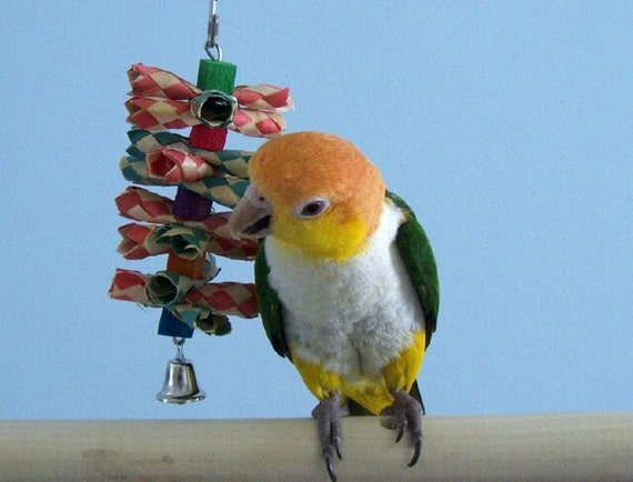 Small Toy Parrots : Small shredalittle bird toy shredding quaker