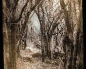 "Fairytale Forest Photo ""Deep Dark Woods"" Dreamy Fine Art Woodland Photograph Print -Surreal Sepia Brown Vintage Photo"