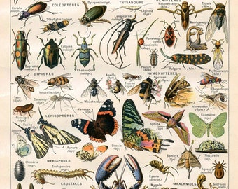 "Vintage Natural History Print ""Arthropodes"" Insect Collection Antique Print - Bugs Butterflies Moths"
