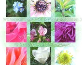 Garden Flowers Stock Photography - 10 High Resolution Photos Ten Flower and Plant  Images in Two PDF Files - Royalty Free Instant Download