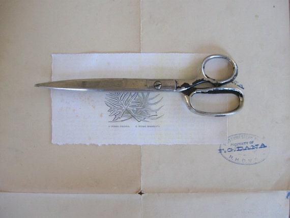 vintage scissors with black handles, vintage shears, antique scissors, sewing scissors, office, paper