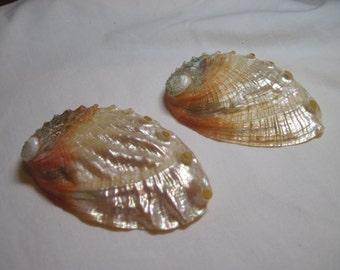 Seashells Abalone Pearlized  Kamstcha Shells   3-4 inch 2