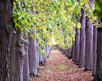 Nature Photography, Tree Photography, Woodland Amethyst Forest Tree Art Print, Autumn Fine Art Woodlands Print - Faraway, So Close