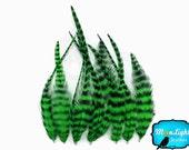 Plumes de vrais cheveux, 1 douzaine - SHORT KELLY GREEN plumes de Hackle de coq Grizzly: 816