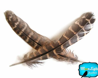 Wing Feathers, 1 Pack - NATURAL Ringneck Pheasant Wing Round Quills Feather : 2139