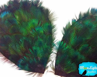 Feather Pads, 1 Piece - Iridescent Green Peacock Plumage Feather Pad : 2300