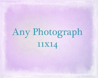 Any Photograph Printed 11x14, Large Photography, The Strange Bird