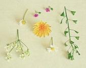 Found Flowers - Nature photography, still life, spring decor, botanical art, feminine art, yellow, green, white