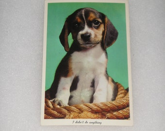 Unused Picture Postcard Dogs Animals Pets Puppies Pups Dog