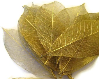 One Dozen Golden Skeleton Leaves Great for Corsages, Hair Clips, Paper Crafts