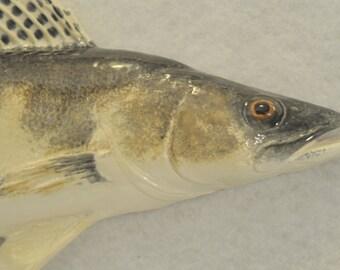 Ceramic Fish - Sauger 2 - Black and Yellow s10