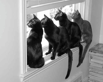 Cute Cat Photo Four 4 Cats Sitting on a Window Sill Four Black and White Grey Unusual Unique Pet Animal Photography Photo Print