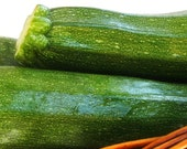 Squash, Black Beauty Zucchini Squash Seeds