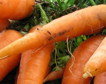 Carrot, Scarlet Nantes Carrot Seeds